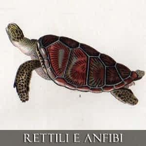 RETTILI E ANFIBI